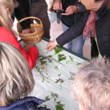 Riconoscimento erbe